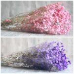Gypso rose et violet